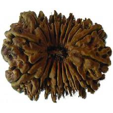 Rudraksha bead 18 Mukhi